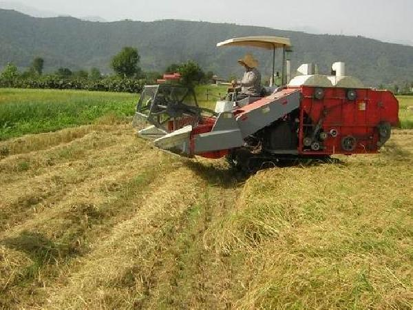 پیش بینی تولید ۲۱۰۰ تنی کلزا در نکا
