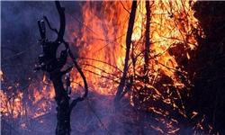 فصل برگریزان و احتمال وقوع حریق در جنگلهای مازندران