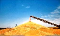 آغاز برداشت جو در زمینهای کشاورزی میاندورود/ پیش بینی تولید ۴۴۰ تنی