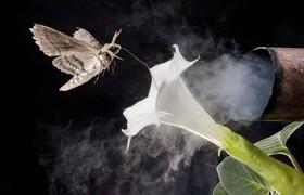 تعییر بوی گلها در اثر آلودگی خودروهای دیزلی