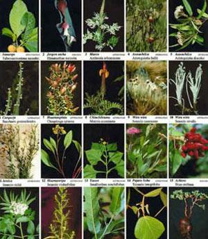 ۱۸۰۰گونه گیاه دارویی در ایران وجود دارد