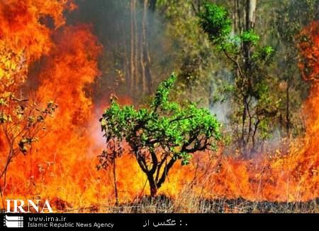 آتش گلوی ریه تنفسی شمال را میفشارد/ آسیبی به درختان سرزنده وارد نشد + تصاویر