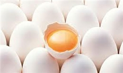 افزایش قیمت تخممرغ در مازندران/ضعف در پرورش مرغهای تخمگذار در استان