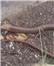 مشاهده «مار پیتلوس» در زیراب و فقر تجهیزات در سوادکوه