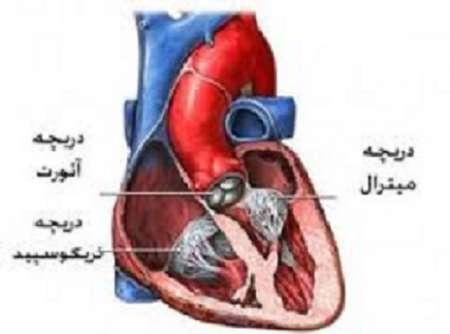 استرس و اضطراب، مهمترین عامل تپش قلب در زنان