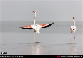 استفاده از تستهای بسیار تخصصی در موضوع تلفات پرندگان میانکاله  / مواجه  با جنگ رسانهای