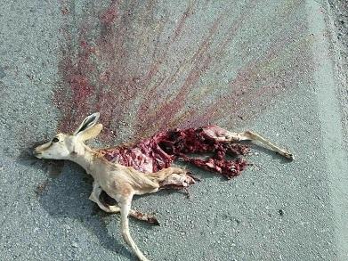 مرگ یک راس اهو به دلیل بی احتیاطی اقای مدیر! + عکس