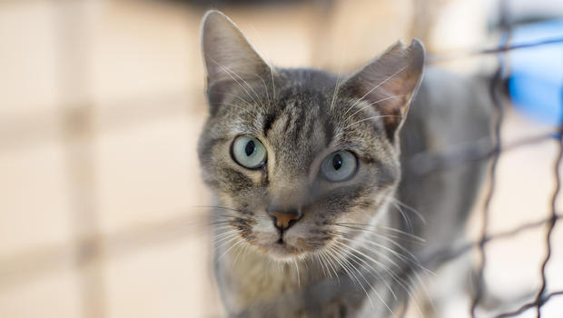 عکس/ گرفتار شدن یک گربه