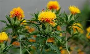 تولید ۲ میلیون گل و گیاه در جویبار