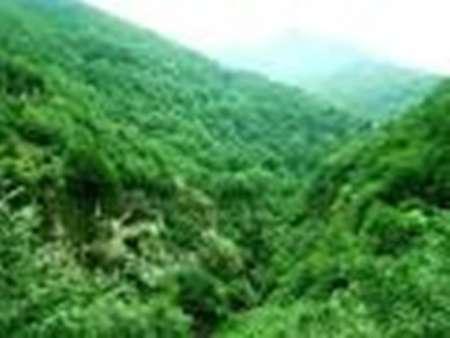 ثبت ۳۱۰ هزارهکتار از جنگلهای هیرکانی بهعنوان دومین میراث طبیعی ایران در فهرست یونسکو