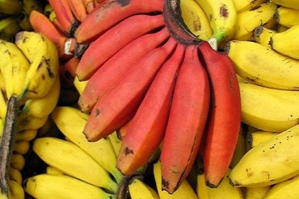 ۹ خوراکی پرطرفدار که برای رفع بیماریهای مختلف معجزه میکند
