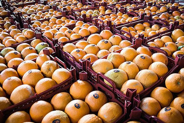 پرتقالهای نارس را چگونه نارنجی میکنند؟
