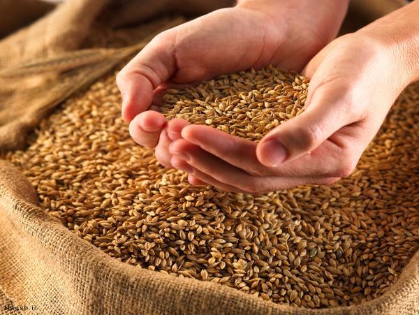 تأمین بیش از ۴۵۰۰ تن بذر اصلاحشده در مازندران
