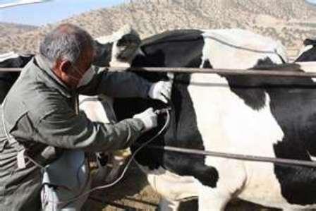 بر اساس ماده ۱۸ قانون نظام دامپزشکی کشور ،از سوی وزارت کشاورزی دامها شناسنامه دار می شوند