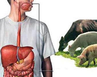 هشدار جدی با افزایش سالانه ۴۰۰ بیمار مبتلا به تب مالت در مازندران