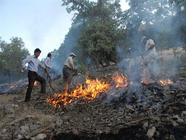 ۸۰۰۰ مترمربع از جنگل های سوزنی برگ بهشهر طعمه حریق شد