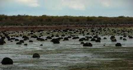آب بندان های بالادست تالاب میانکاله مازندران ساماندهی می شود