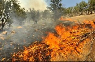 احتمال آتشسوزی جنگلها و مراتع با افزایش دمای هوا در مازندران