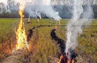 آتش زدن کاه و کلش در مزارع کشاورزی غیرقانونی است