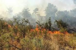 آتشسوزی جنگلهای امامزاده عبدالله / مهار نشدن آتش از صبح تاکنون