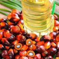 سهم ۳۰ درصدی مصرف پالم در سبد غذایی خانوارهای ایرانی