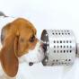 تشخیص سرطان به وسیله سگ