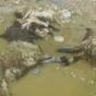 سیلاب ۱۰۰ راس گوسفند را در سبزوار تلف کرد