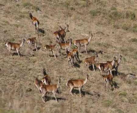 حمله شکارچیان متخلف به مسؤول پناهگاه دشتناز ساری