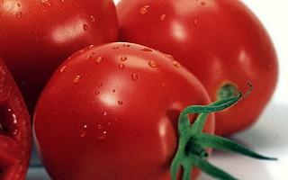افزایش قیمت گوجه فرنگی مقطعی است/ بازار متعادل می شود