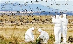 همایش بررسی علت تلفات پرندگان میانکاله به تعویق افتاد