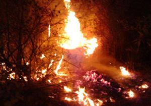 آتش سوزی در میانکاله مهارشد