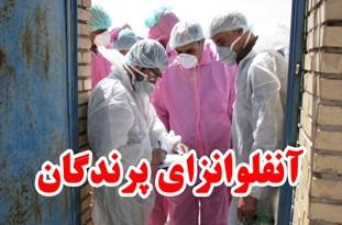تایید یک مورد آنفلوآنزای مرغی در پرندگان مازندران